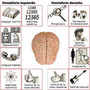 Integración y Sincronización de los Hemisferios Cerebrales (2)