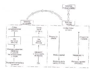 TDAH_cap14_img01