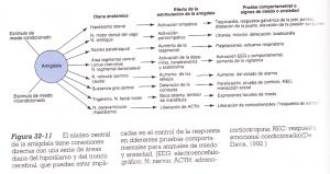 TDAH_cap15_img01