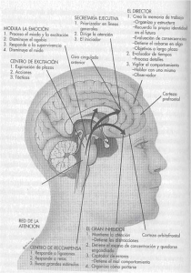 TDAH_cap16_img01